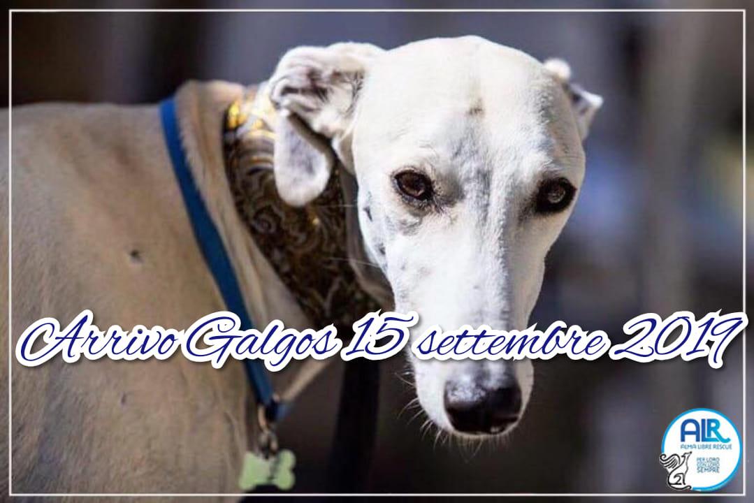 ARRIVO GALGOS                    15 SETTEMBRE 2019