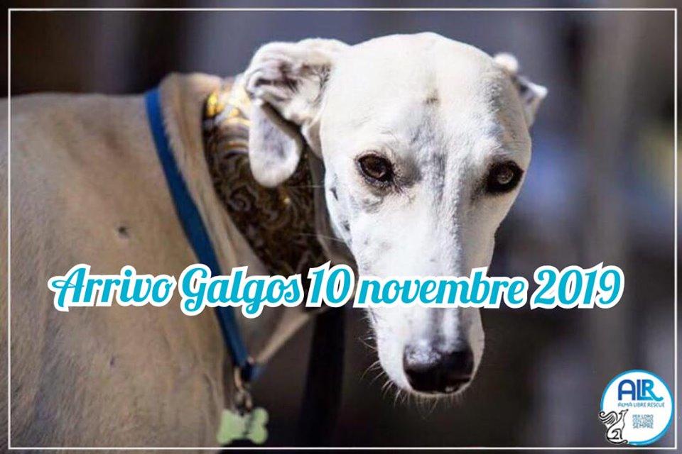 ARRIVO GALGO 10 NOVEMBRE 2019