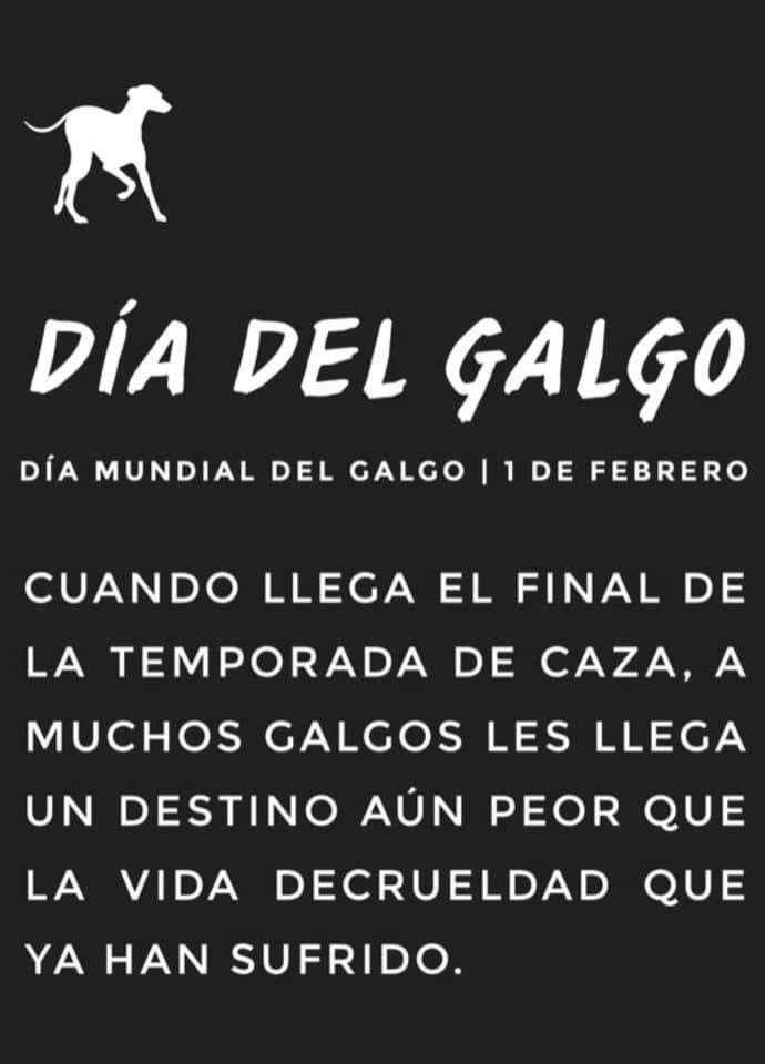 El dia del Galgo